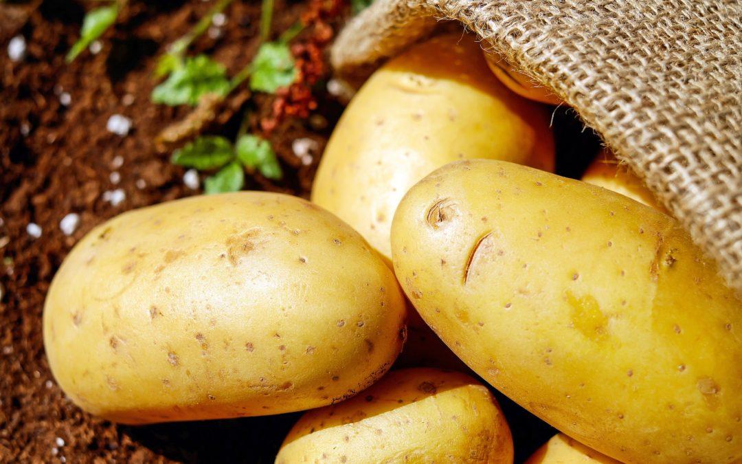 Le calcium est essentiel pour la pomme de terre