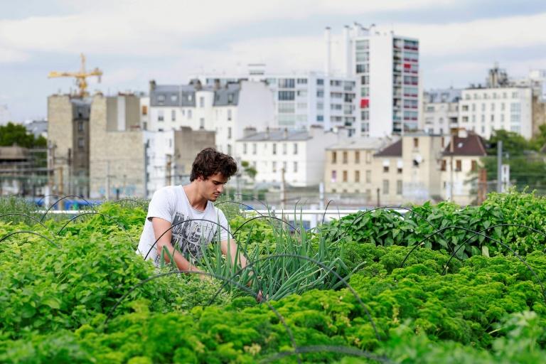 Les agricultures urbaines en quête de durabilité et de rentabilité