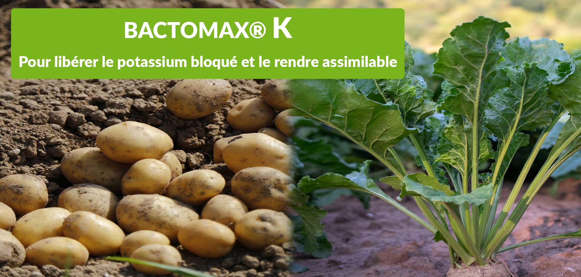 Pour l'assimilation du potassium